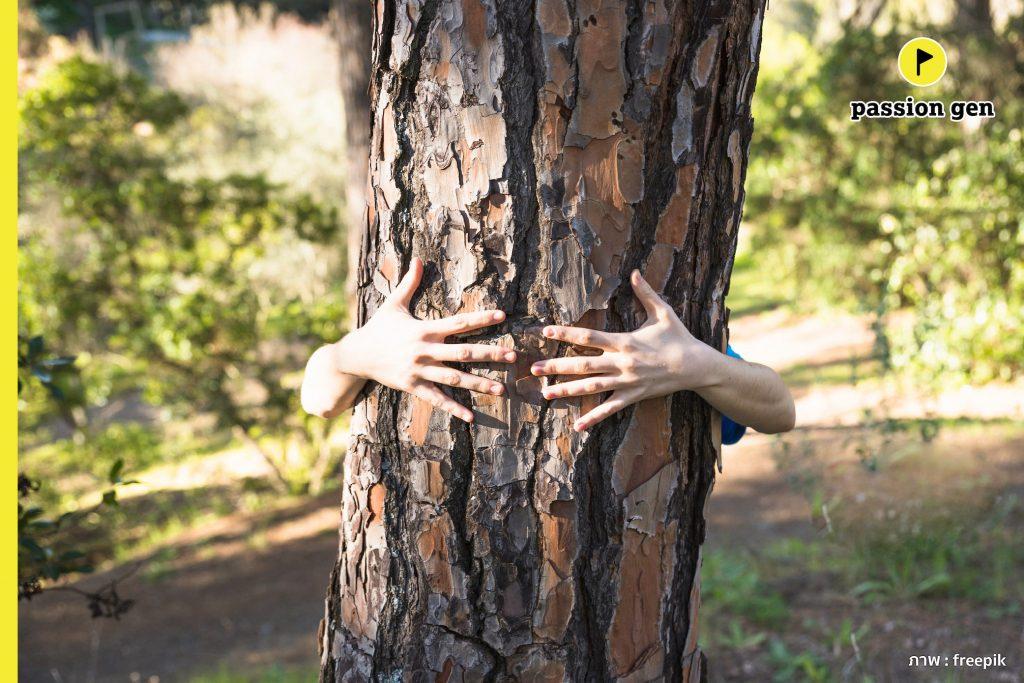 กอดป่าบำบัด…เทรนด์ใหม่เพื่อคนรักสุขภาพ
